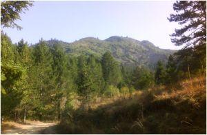 Bozdovec
