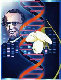 gjenetike2